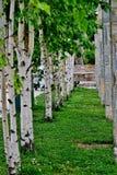 Parkera med vita tr?d och kolonner av olika stenar royaltyfri bild