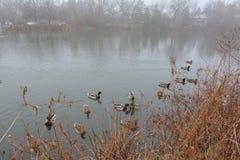 Parkera och sjön i Richmond Hill i Toronto i Kanada i morgonen i vintern Arkivfoto