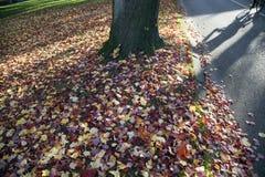 Parkera och skugga av cykeln med colorfulllönnlöv i nedgången Royaltyfria Bilder