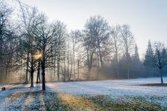 Parkera område med träd som är främsta av slottensamhet i Stuttgart in Royaltyfria Foton