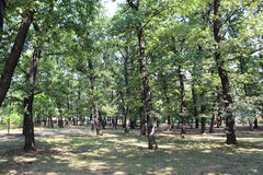 Parkera på en varm sommardag i den Borisova trädgården Sofia Arkivbild