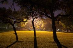 Parkera på natten Arkivfoton