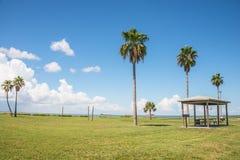 Parkera på stranden med palmträd royaltyfria foton