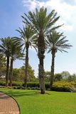 Parkera Ramat Hanadiv, minnes- trädgårdar av Baron Edmond de Rothschild Royaltyfria Foton