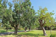 Parkera Ramat Hanadiv, minnes- trädgårdar av Baron Edmond de Rothschild Royaltyfria Bilder
