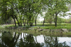 Parkera, reflexion i vattnet träden och träd Fotografering för Bildbyråer
