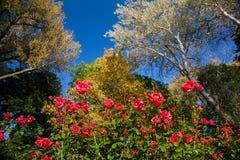 Parkera rosor royaltyfria foton