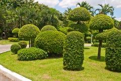 parkera sculpted trees Royaltyfri Fotografi