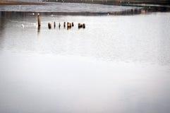 Parkera sjön Fotografering för Bildbyråer