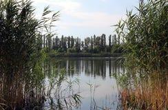 Parkera sjön, blå himmel, den gröna lakesiden, stillhet Arkivfoton