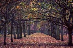 Parkera skogen London UK Arkivfoto