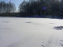 Parkera skogen, vinterhavet från snö Royaltyfri Bild