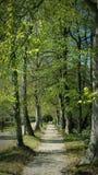 Parkera skuggaljus - gräsplan Fotografering för Bildbyråer