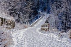 Parkera slingan som täckas med ny snö Arkivbilder