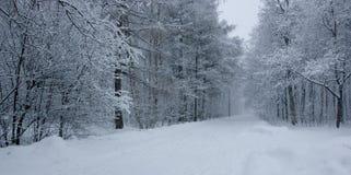 parkera snow Arkivbilder
