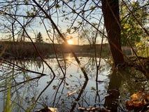 Parkera solnedgången till och med trän royaltyfri foto