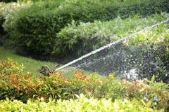 parkera sprinkleren Royaltyfri Fotografi