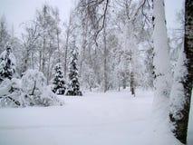 Parkera träd efter snöfallet Arkivfoto
