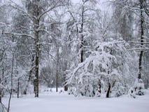 Parkera träd efter snöfallet Fotografering för Bildbyråer