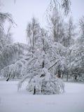 Parkera träd efter snöfallet Arkivfoton