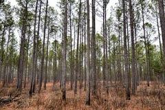 Parkera träd på vinterdag Arkivbild