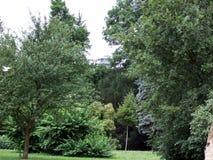 Parkera trädet Royaltyfri Foto
