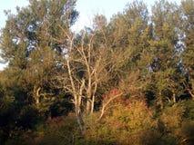 Parkera trädet Royaltyfri Bild