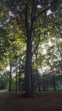 Parkera trädet Forest Sun Walking Baum Sonne royaltyfri foto