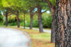 Parkera trädet och defocused suddighetsbakgrund Royaltyfri Fotografi