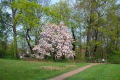 Parkera trädgården Arkivbild