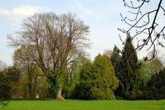 Parkera trädgården Arkivbilder