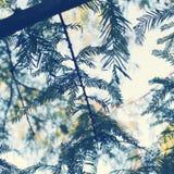parkera treen Royaltyfri Fotografi
