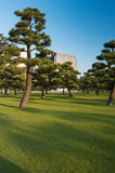 parkera treen Fotografering för Bildbyråer