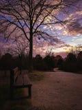 Parkera vägen för vintern för bänksolnedgångträdet royaltyfri foto
