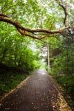 Parkera vägen i trädsolnedgång Arkivfoto