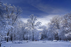 parkera vintern Royaltyfri Bild