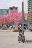 Parkerade cyklar på bakgrunden av konstgjorda rosa träd på den nya Arbaten i Moskva Royaltyfri Fotografi