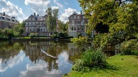 Parkerar blåa tagande för en häger av på ett damm i staden Vondelpark i den Amsterdam mitten, Nederländerna royaltyfria foton