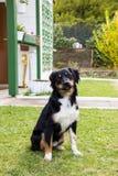 Parkerar den djura yttersidan för den roliga hunden Royaltyfri Bild