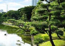 Parkerar den härliga japanska Hamarikyu för naturen och för det stads- begreppet trädgården i mitten av Tokyo med sjön och reflac arkivfoto