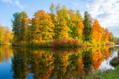 Parkerar den mogna hösten för den guld- nedgången i Pavlovsky, Pavlovsk, St Petersburg, Ryssland royaltyfri bild