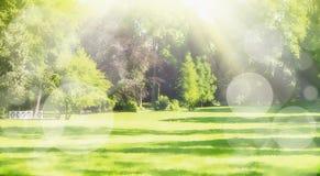 Parkerar den suddiga naturen för sommar bakgrund med solstrålar, gräsmatta och bokeh, panorama Royaltyfria Foton