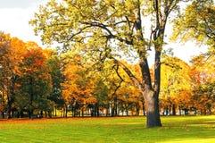 Parkerar det pittoreska landskapet för hösten i tappningsignaler som det soliga höstlandskapet parkerar tänt vid solsken-höst, i  Royaltyfria Foton