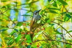 Parkerar det röda bärträdet Beihai för den bruna fågeln Peking Kina royaltyfri bild