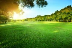 Parkerar glänsande ljus för den härliga morgonsolen offentligt med gräsplan gr Arkivfoto