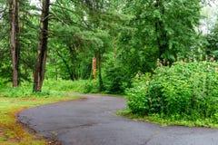 Parkerar gröna träd för natur med den lantliga vägen i tystnad i vår Royaltyfri Fotografi