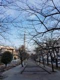 Parkerar i hösten där är ett träd utan sidor Och kan se byggnaden för det Tokyo himmelträdet i Japan royaltyfria bilder