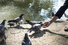 Parkerar matande fåglar för man in arkivbild