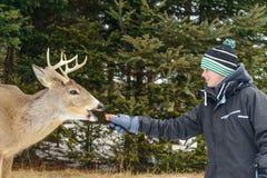 Parkerar matande hjortar för pojke i omegan av Quebec royaltyfri foto