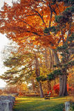 Parkerar overkliga färger för härlig höstnedgångskog av fantasilandskapet med trädfilialer och röda gulingsidor på jordningen Fotografering för Bildbyråer